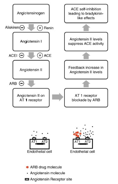 ARBによる血管性浮腫のメカニズムの図.jpg