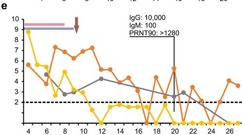 コロナウイルスのウイルス量の図2.jpg
