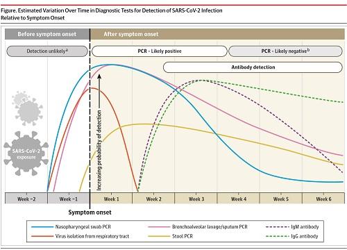 コロナウイルス感染症の経過と検査結果の図(小).jpg