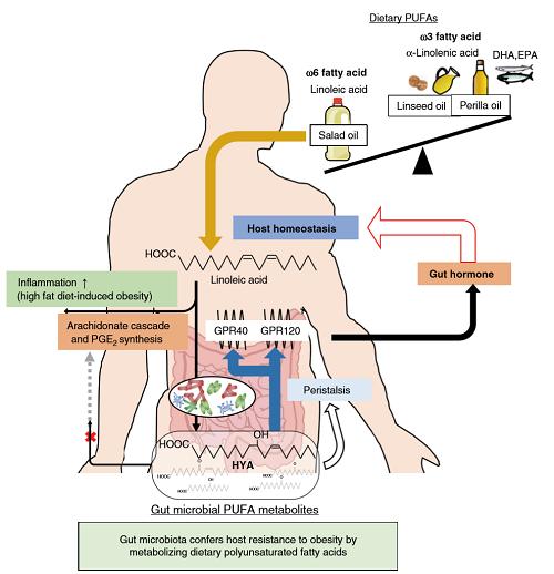 多価不飽和脂肪酸と腸内細菌の関連の画像.png