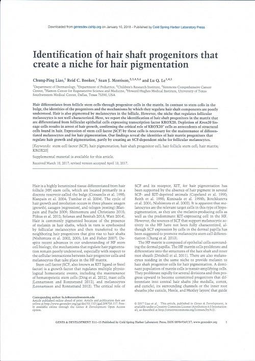 白髪の遺伝子.jpg